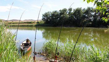 Guía-pesca-orilla-ebro-riba-roja-mequinenza-portmassaluca
