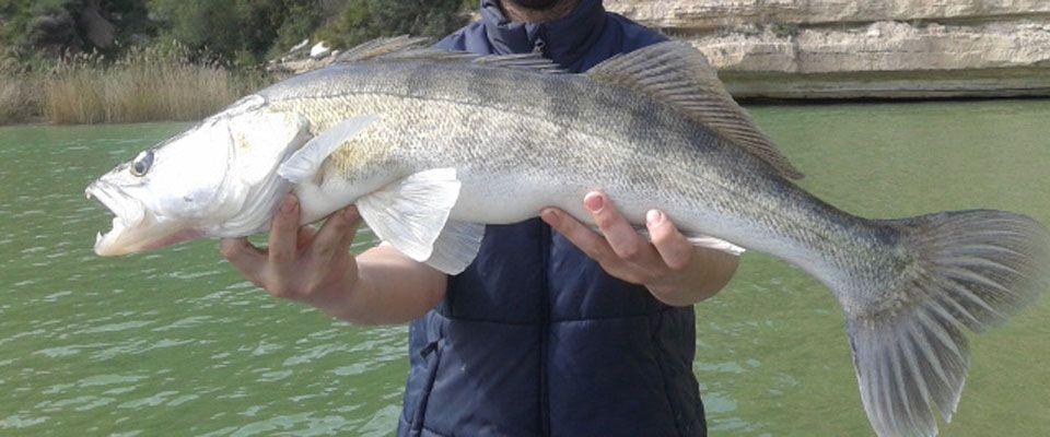 zander fishing on the ebro river near the camping instalations