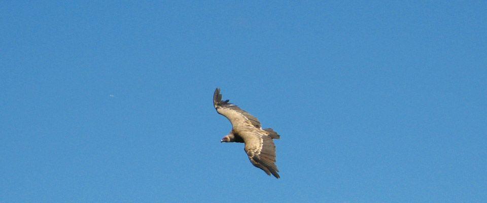 Birdwatching-actividades-portmassaluca-camping-2