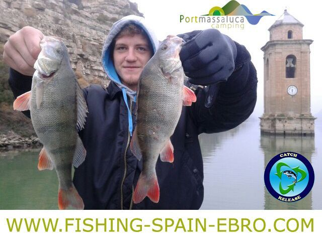 fishing-offer-spain-ebro-big-perch-2016
