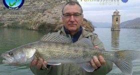 Pesca de luciopercas en el río ebro cerca de mequinenza