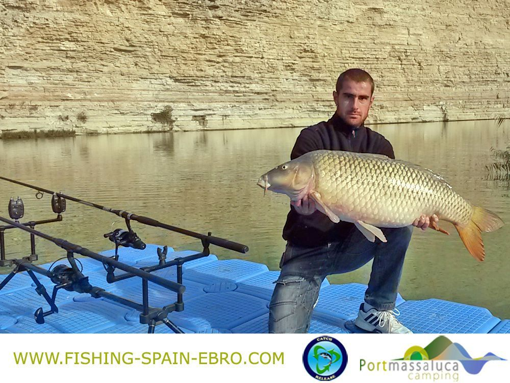 oferta-pesca-carpfishing-spain-ebro-grande-carpa-2016